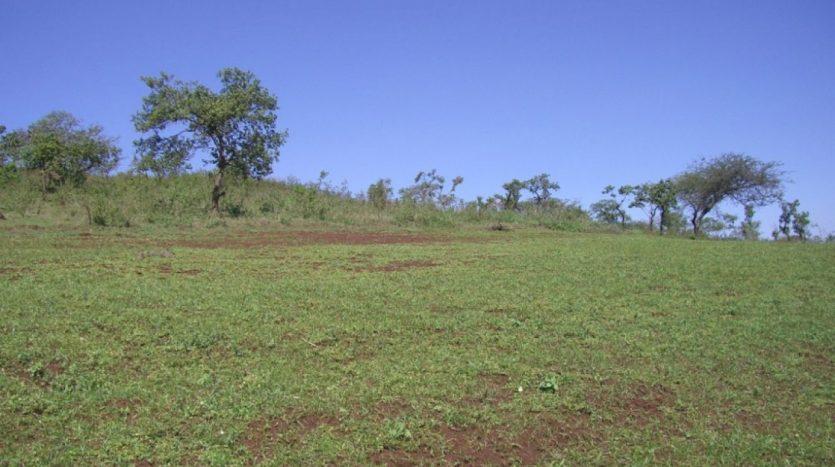 5 Acres For Sale In Kisongo-Arusha Tanzania2