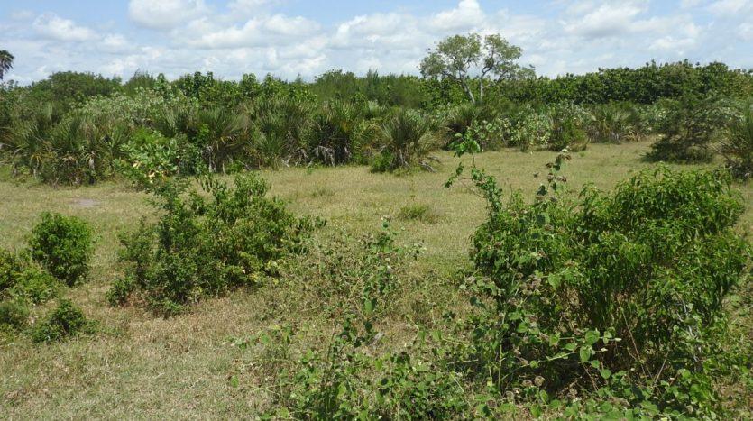 Farm For Sale at Kipumbwi – Teak Farm – South of Pangani