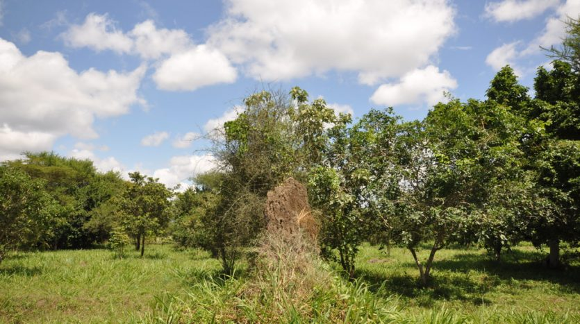 House For Sale In Usariver with 25 Acres13