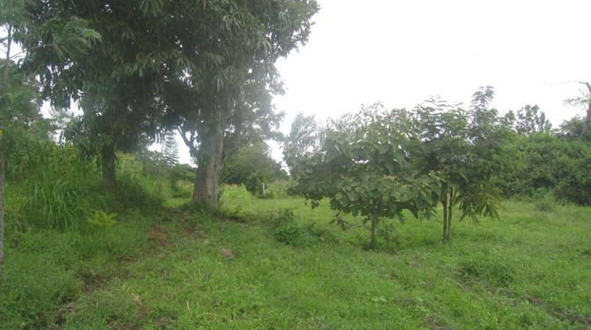 Plot For Sale 6 Acres In Usariver -Arusha