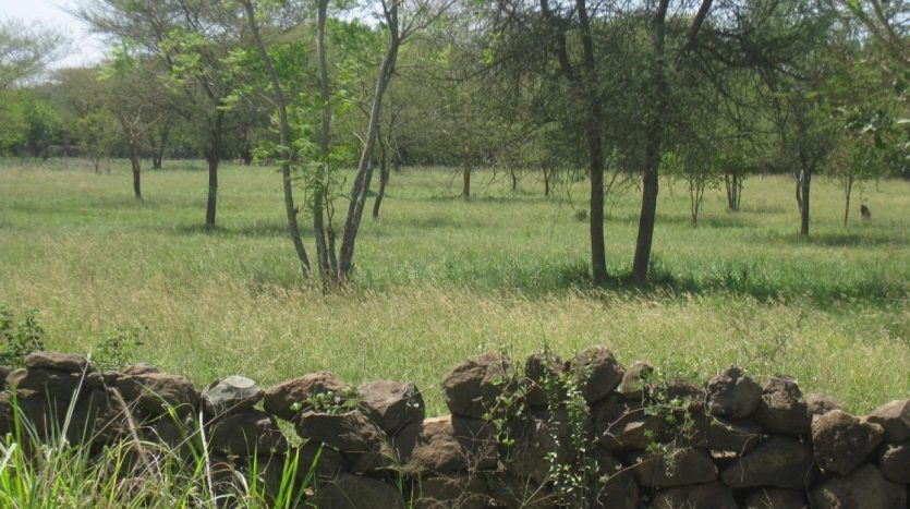 Plot For Sale In Arusha-Dolly Estate